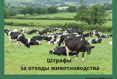 Штрафы за отходы животноводства