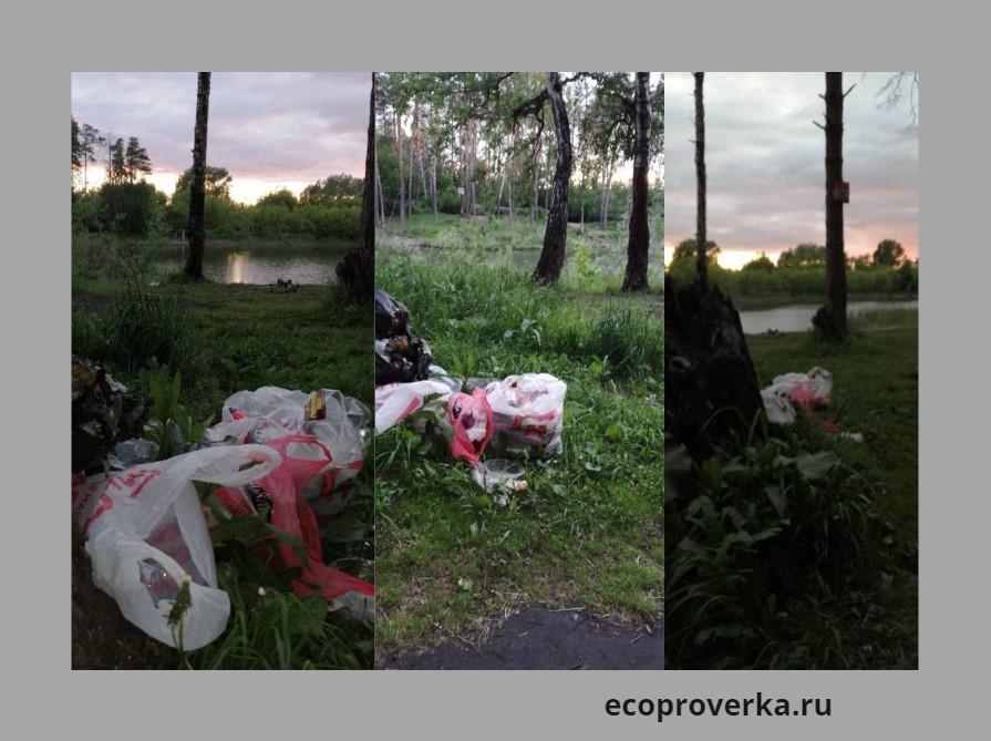 Разбросанный мусор в виде бытовых отходов на поле и в лесу